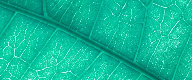 skleroterapia żylaków i pajaczków żylnych - bydgoszcz, osielsko