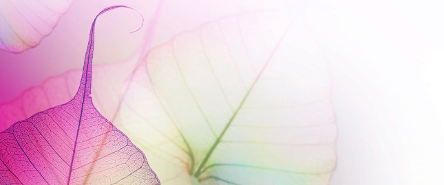 udrożnienie, balonikowanie i stentowanie tętnicy szyjnej