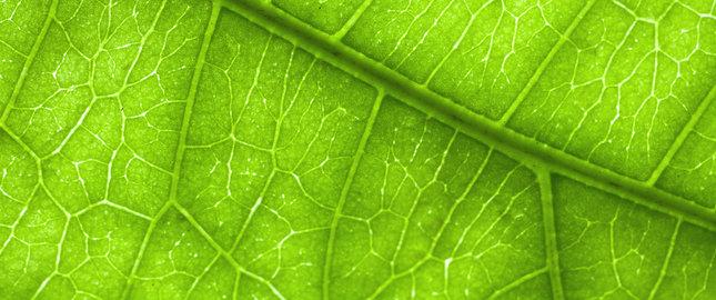 leczenie zylakow powrozka nasiennego embolizacja miesniakow