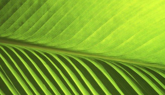 klejenie żylaków venaseal - super glue na żylaki