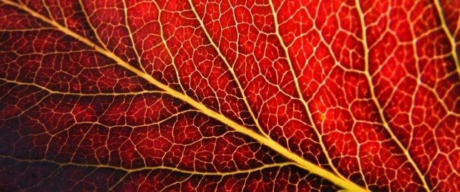 flebologia leczenie żylaków bydgoszcz, gdańsk, poznań